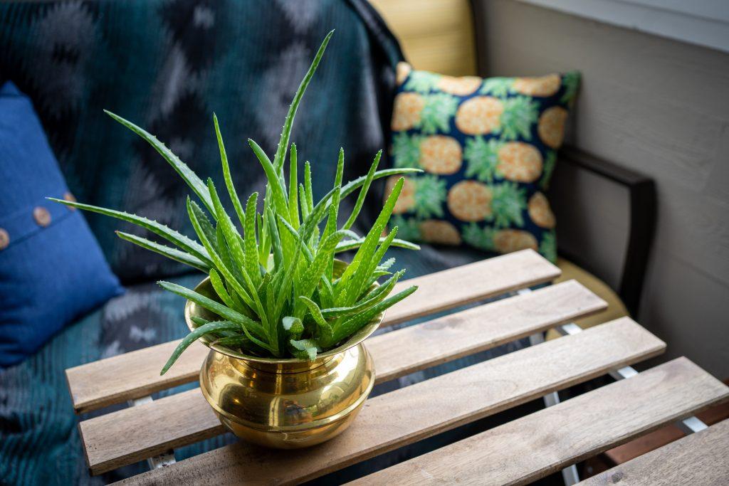 Where Can Aloe Vera Be Found?