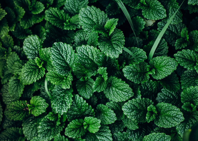 Mint | Natural Spice