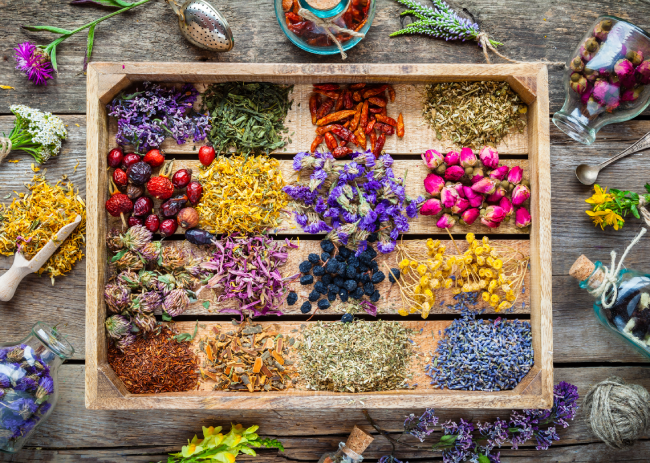 5 Lesser-Known Plants Used in Herbal Medicine